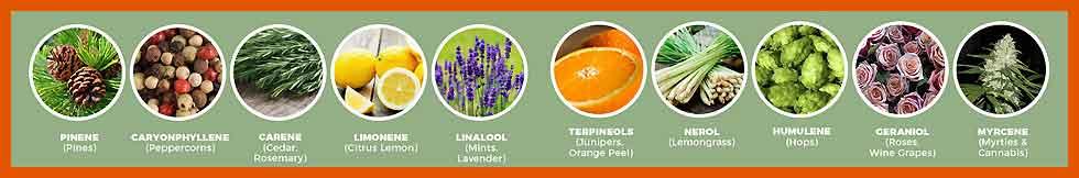 Medicinal Properties of Cannabinoids and CBD Terpenes