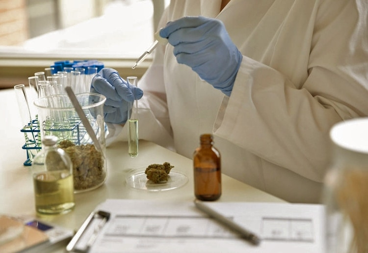 CBD Clinical Studies and Benefits Research Reports