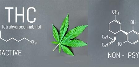 Hemp versus Cannabis
